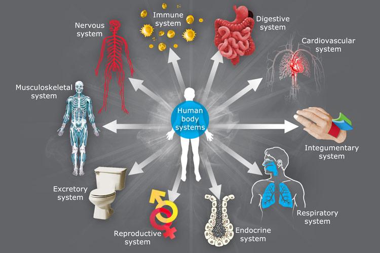 detox body systems